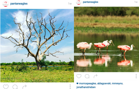 Trip to Pantanal