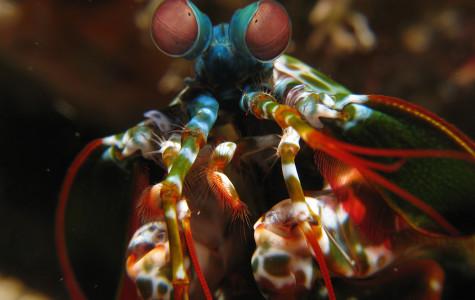 On mantis shrimp and Monet