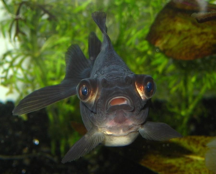Fish Fighter II: Underwater Warrior