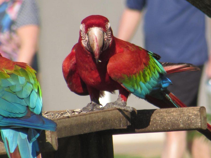 Macaw in Zagaia hotel