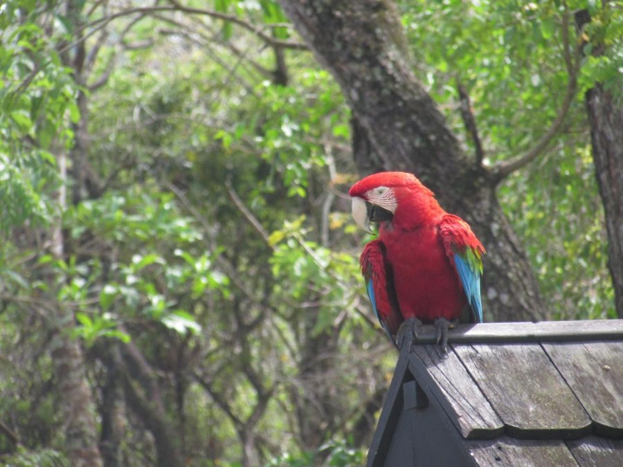 Macaw in Gruta São Miguel