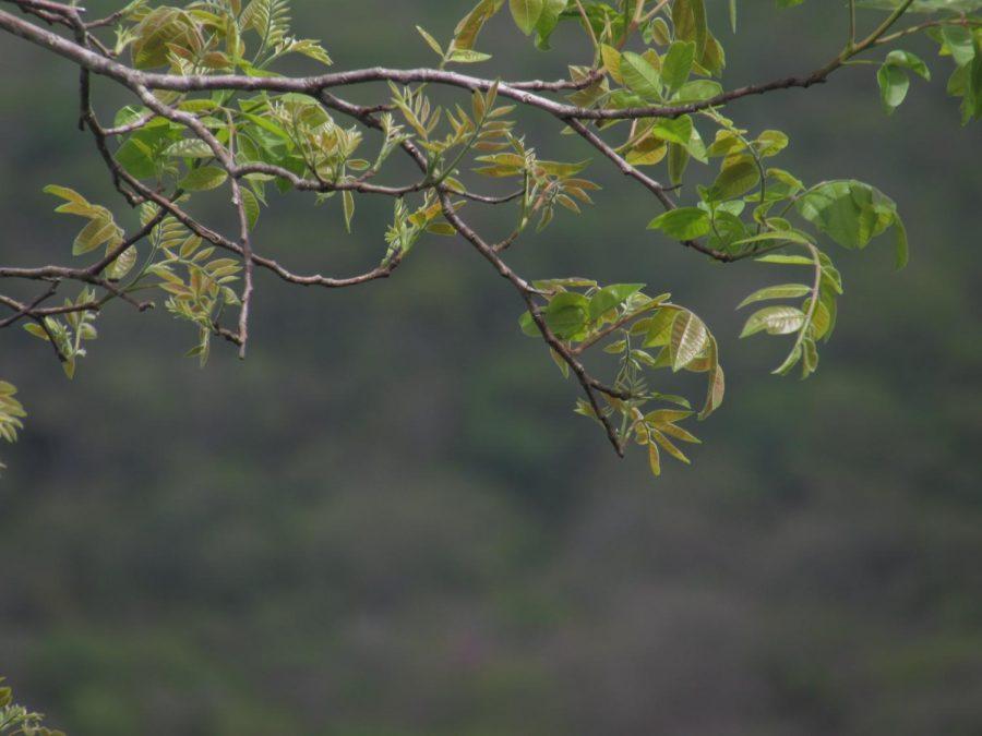 Plants in Gruta São Miguel