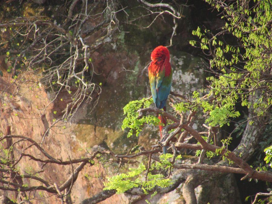 Macaw in Buraco das Araras